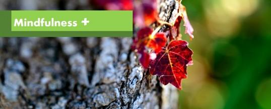 Mindfulness Plus u listopadu