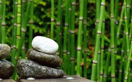 Tečaj mindfulnessa za stručnjake – online