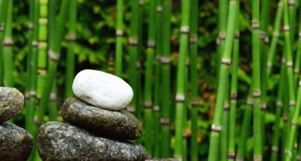 20. ciklus Tečaja mindfulnessa – za stručnjake